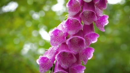 美景 花朵 大自然 美丽风景
