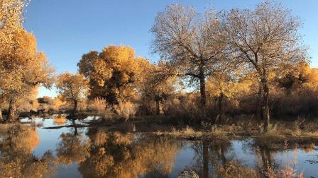 低碳停驶就能在大西北种下一棵属于自己千年不死的胡杨树