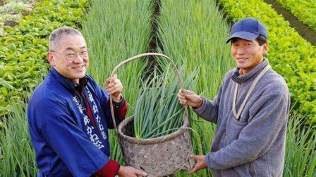 日本国土面积那么小, 为什么还能出口大量农产品到中国?