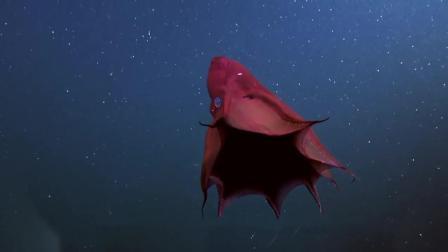 住在百慕大三角海底的动物, 个个都非常奇特, 而且不好惹