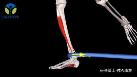 【3D动画课堂】推荐一个矫正扁平足的训练: 弹力带抗阻踝内翻