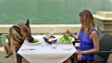 世界上最有钱的3条狗, 比王思聪的狗都有钱, 拥有26亿资产!