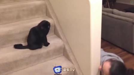 最新搞笑动物视频合集, 看到第二个就忍不住笑出