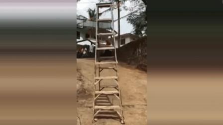 会走路的梯子, 若不是拍下了视频, 谁信? 这是什么原理?
