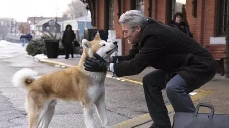 狗狗和人之间的感情, 究竟有多深?