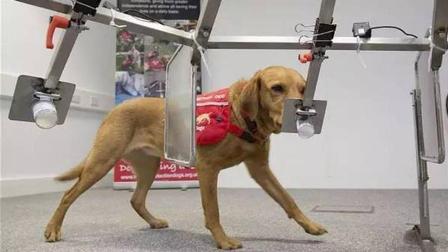 这只能预测癌症的狗, 准确率高达93%, 是怎么做到的?