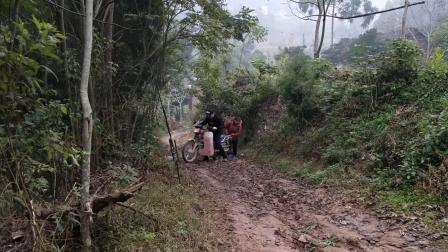 女婿騎摩托車搭丈母娘去山上收黃豆, 結果路上摔了一跤, 好尷尬