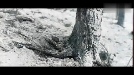 前苏联二战猛片《围困》, 红军全面反攻德军, 终解列宁格勒之围!