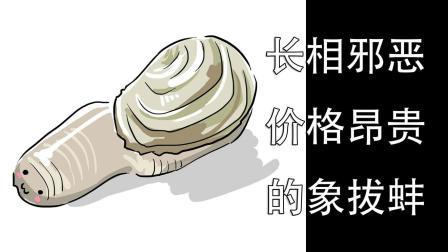 长相邪恶价格昂贵的象拔蚌, 从切片到烹调, 看的都流口水了!