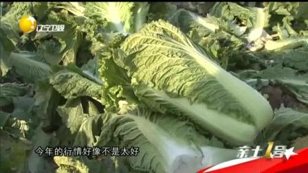 锦州百合小菜变身记