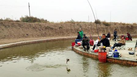 《听李说渔2》第48集 黑坑回收的鱼都去哪儿了?