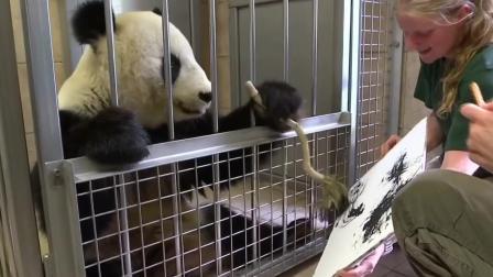 这年头, 连熊猫都得会点手艺了, 滚滚: 老外, 看本大师挥毫泼墨!