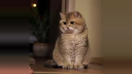 搞笑动物集锦: 要不要这么可爱啊!