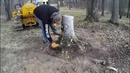 老外开卡特彼勒推土机带动树桩, 连根拔起