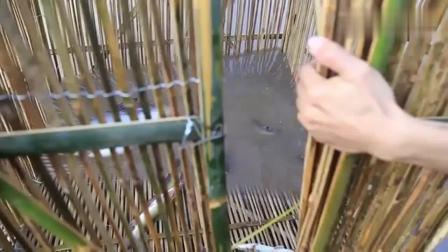 农村兄弟俩用竹子做个大地笼, 刚下水就捉到大鱼, 这是顿顿吃鱼的节奏