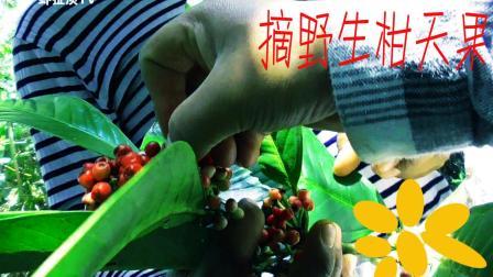 农村男子摘柑天果遇外发现惊人的秘密虾扯淡TV陶志云南布朗族语言