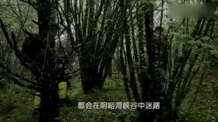 湖北神农架深山, 护林员金丝猴到悬崖尽头, 竟发现一神秘无人区