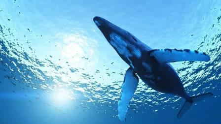 你有深海恐惧症吗?黑漆漆的深海中究竟暗藏了哪些惊人的生物