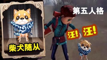 第五人格: 庄园第一看门狗! 柴犬随从柴之助真是太可爱了