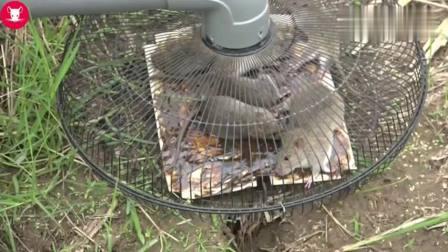 看农村小伙自己做的捕鼠陷阱, 捉了一窝老鼠
