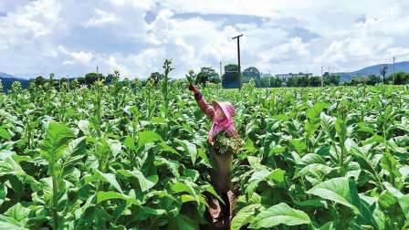 适合农村种植的6个致富项目, 看看有你想做的吗?
