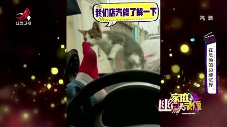 家庭幽默录像 2018 汽修厂派来的卧底猫,遇见它以后得绕着走了
