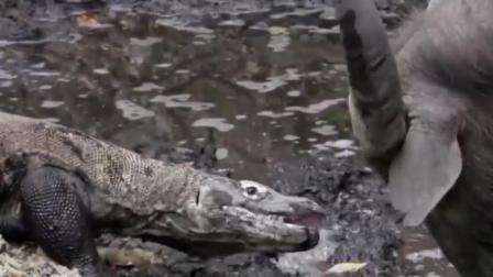 犀牛闯入河马地盘喝水, 重量级对决, 最后一幕实
