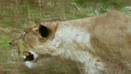 一头非洲鬣狗就能把6只胡狼揍趴下, 二哥厉害不