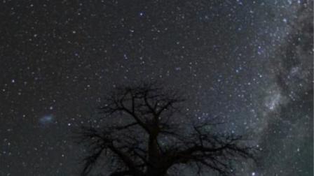 南非古树搭档璀璨星空美到令人窒息