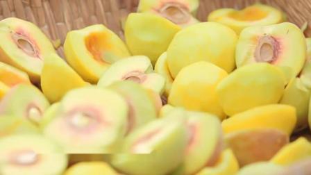 原味 这么多品种的的桃子,为什么偏挑黄桃做罐头,桃农给出了答案