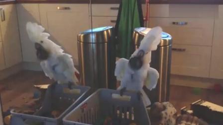 搞笑动物视频: 猫咪与鸟, 哪个更加搞笑?