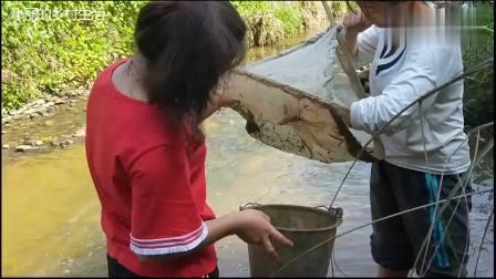 农村90后姐妹捉虾, 用蚊帐缝出神器, 小溪里收获不错!