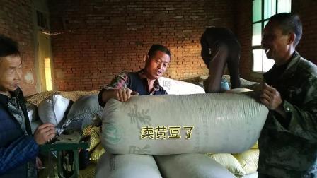 农村大叔去收购站卖黄豆, 满满一车黄豆能卖多少钱?