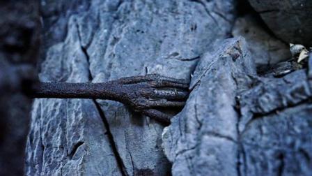 奇闻: 3000年的菩提树长了一只手伸进崖缝, 网友打