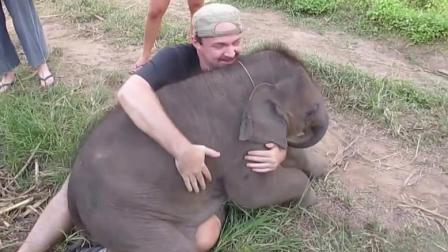 小象撒娇求抱抱, 小象: 不抱我, 我就不走了