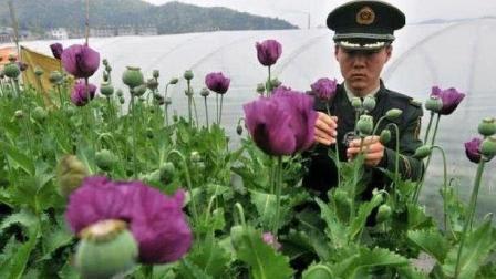 中国最特殊的一群农民, 被武警24小时持枪守卫, 种出的东西根本就不愁卖?