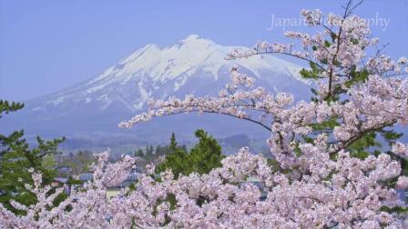 带你去看-日本春天的风景  樱花盛开  Japan