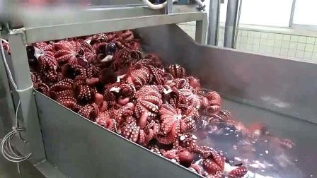 自动生产线加工章鱼过程, 清洗打包一条龙, 效率真高!