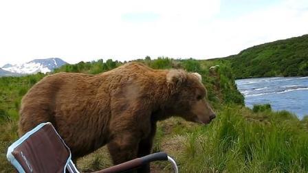 小伙在野外钓鱼, 一直野生棕熊过来坐旁边看, 把小伙直接整懵了