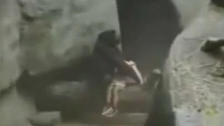 小朋友掉进展区 雄猩猩闻声而来 竟贴心守护并轻抚背部安慰孩子