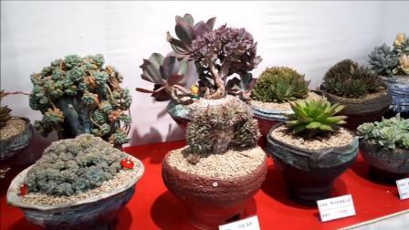 2018年韩国多肉植物展, 多肉植物、盆栽
