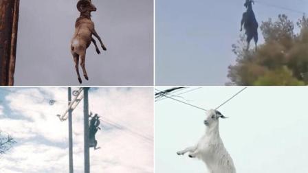 羊: 没什么事我先挂了