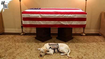 老布什悼念仪式 服务犬泪眼告别
