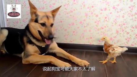 """老汉养了17年的狗去世了, 走后留下的""""遗产"""", 价值却不菲!"""