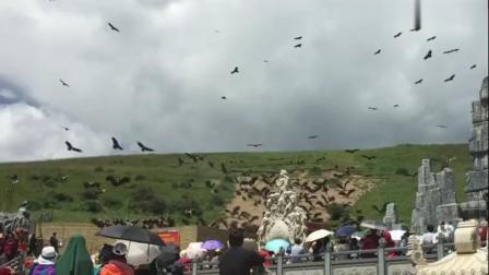 西藏风俗色达天葬台, 数百秃鹫完成了它的使命