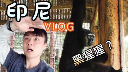 【vlog】我的摄像机差点被黑猩猩抢走了? ! <印尼行>