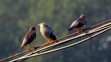 一群鸟停在电线上, 起飞之时发生爆炸, 镜头拍下全过程!