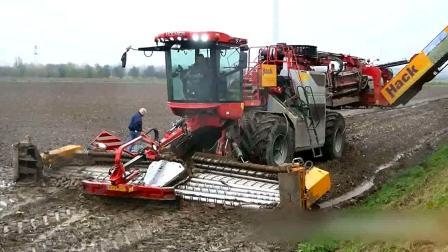 先进农业收获机械, 可12行一起收割, 效率真高!