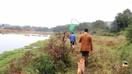 农村野外找老爸养的家禽, 走了2公里才看清楚, 却发现不对头