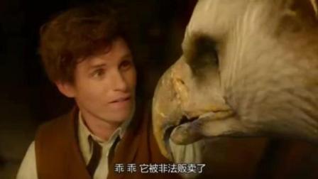 电影《神奇动物在哪里》片段, 这不是神雕吗怎么跑国外了……